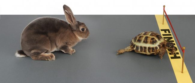 turtle and bunny race